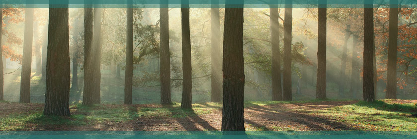 Image of a Forest from the Forest Schools banner image