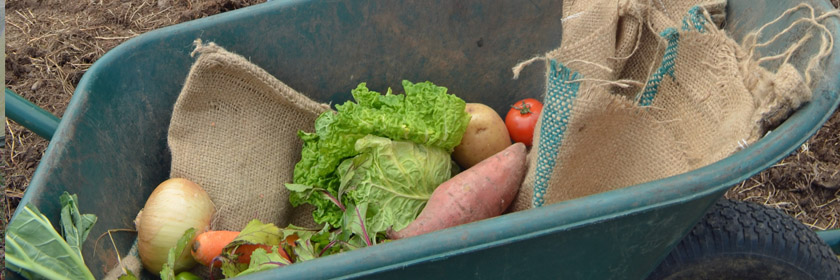 Photograph of some vegetables in a wheelbarrow