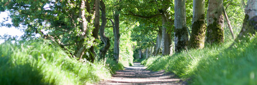 Photograph of a path at Carnfunnock Country Park