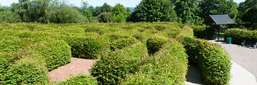 Photograph of the Carnfunnock Maze