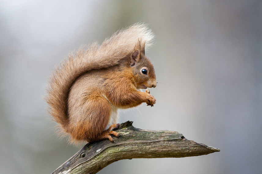 Wildlife Walk for Red Squirrel Day image